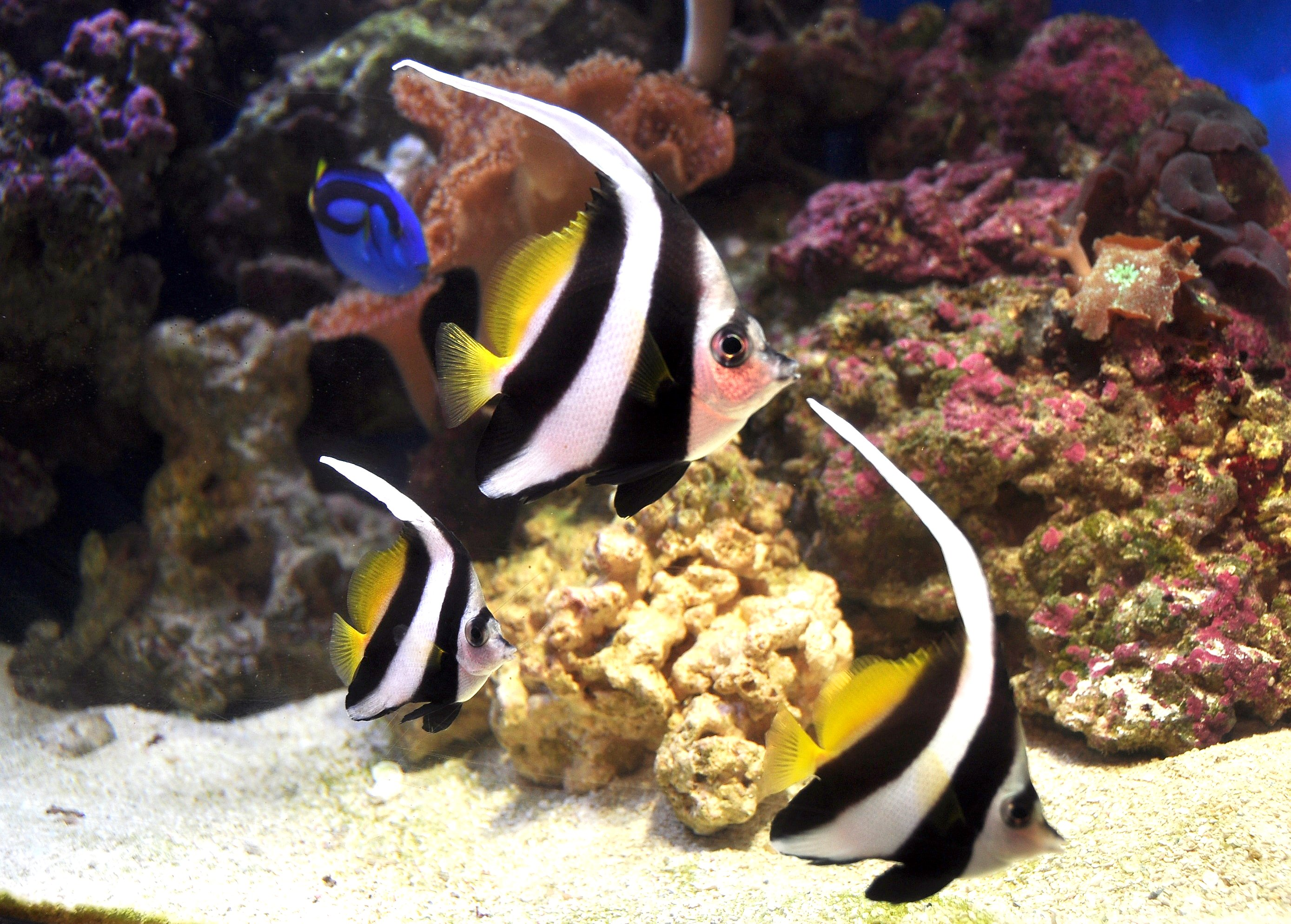 11 Marine Life To Watch Out For During Your Snorkeling