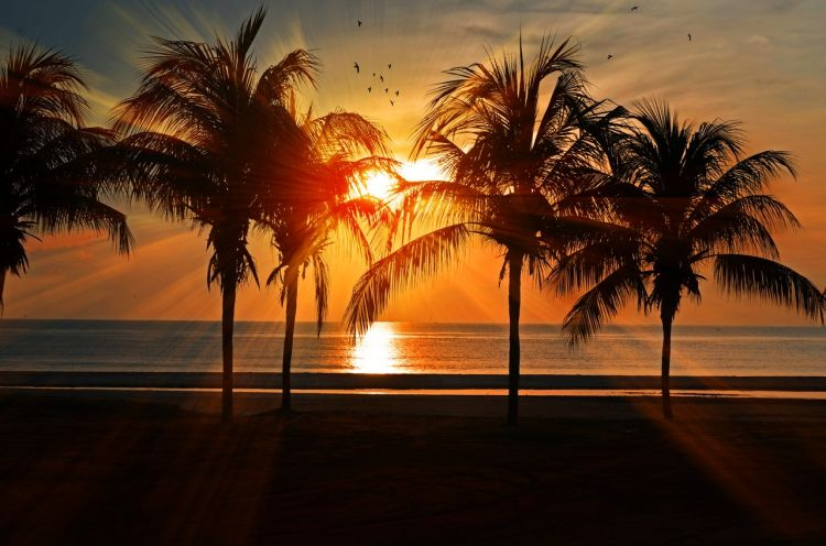 palm trees beach sunset view